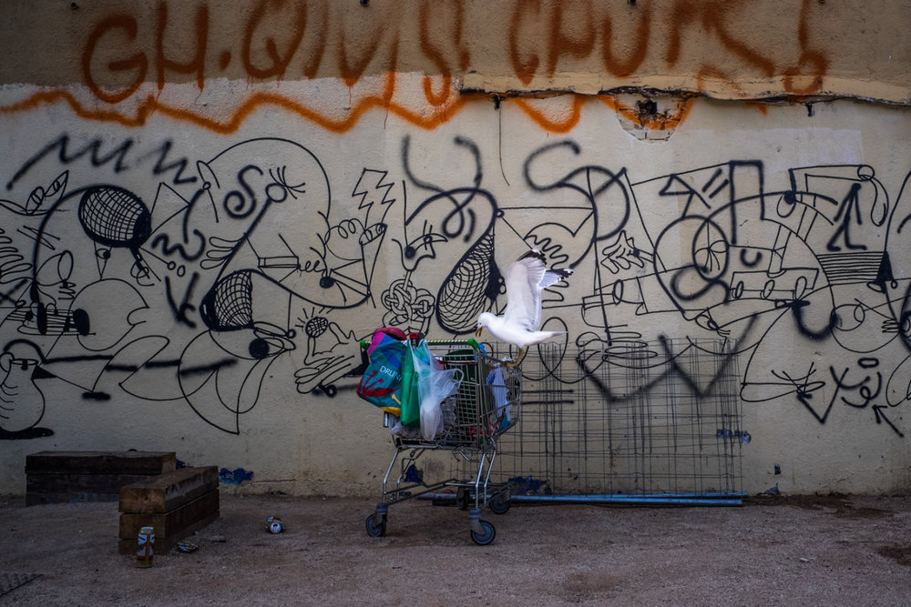 Reality check.  A seagull going through the shopping cart of a homeless man in the search for food. Barcelona, Spain.