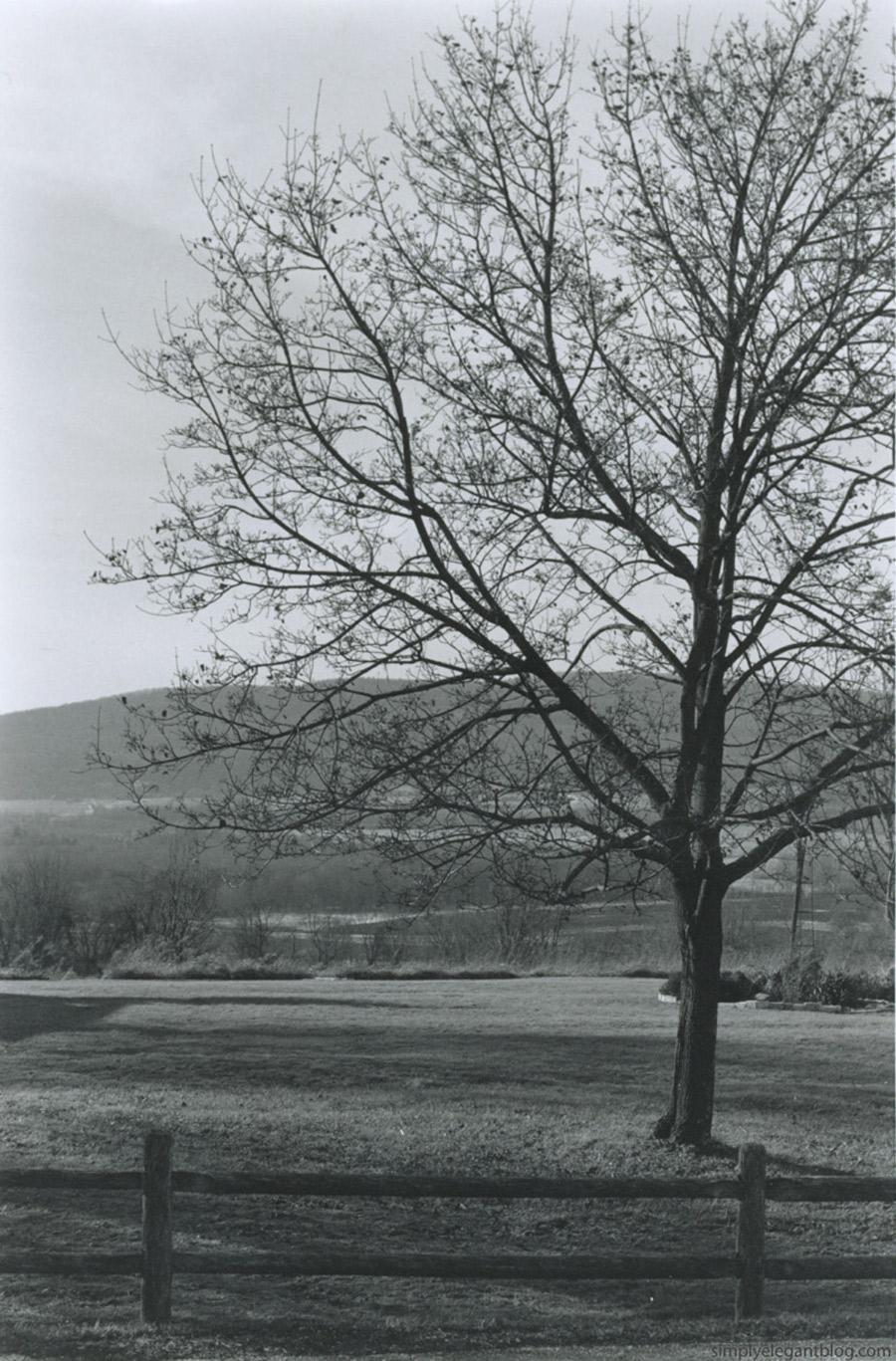 Tree-Blog2