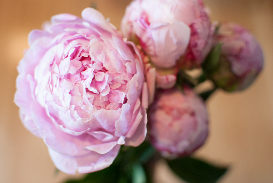 Peony Photography, Pink Peonies, Blog Photography, Flower Photography, Simply Elegant Blog, College Lifestyle Blog