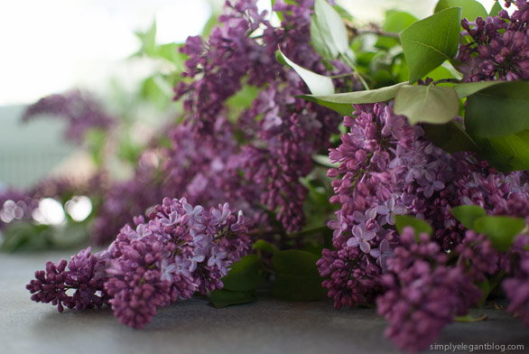 Purple Lilacs, Summer Flowers, Purple Lilacs, Flower Photography, Simply Elegant Blog