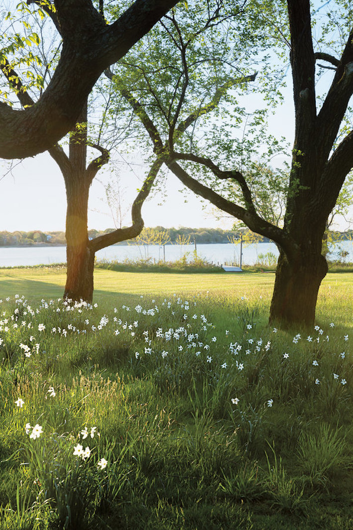 Anna Wintour's Garden by Miranda Brooks