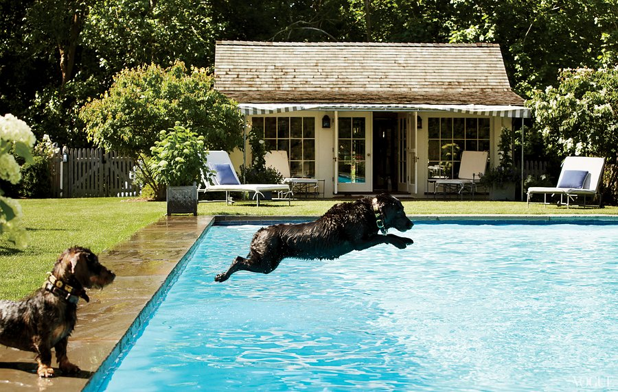 Locust Valley Pool and Pool House. Black Lab in the Pool