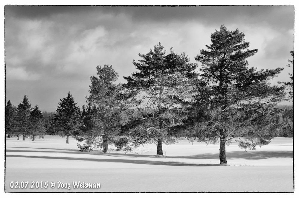 Three grand pines.