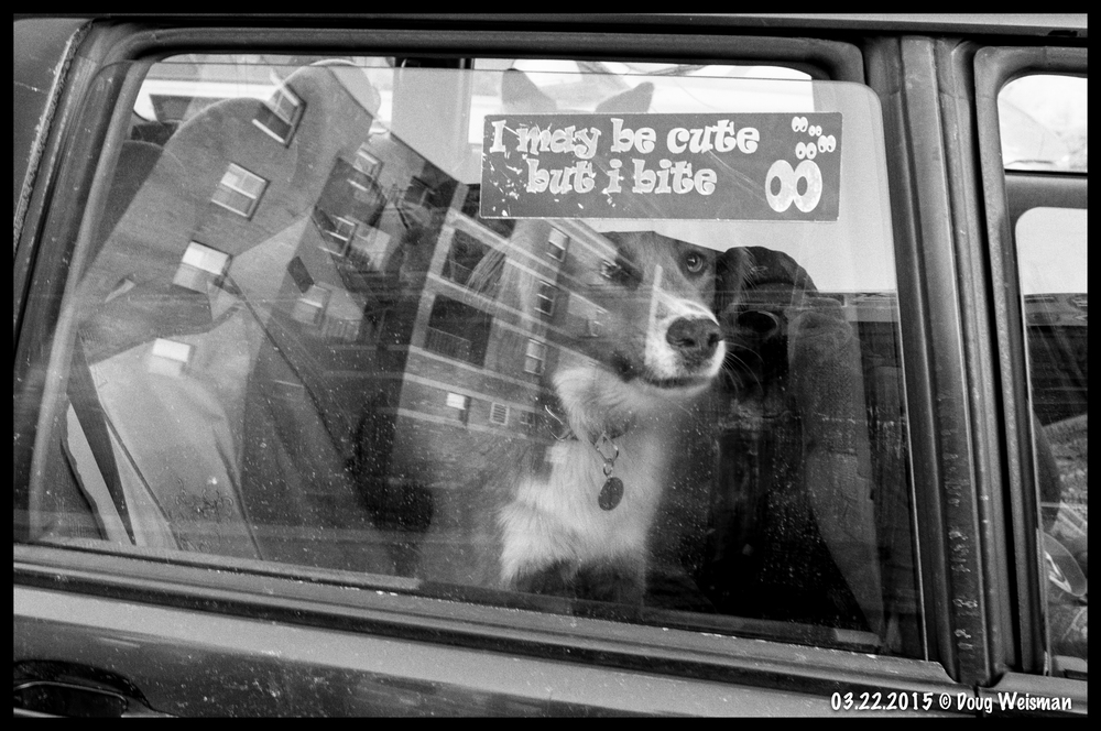 Bad doggie in the window.