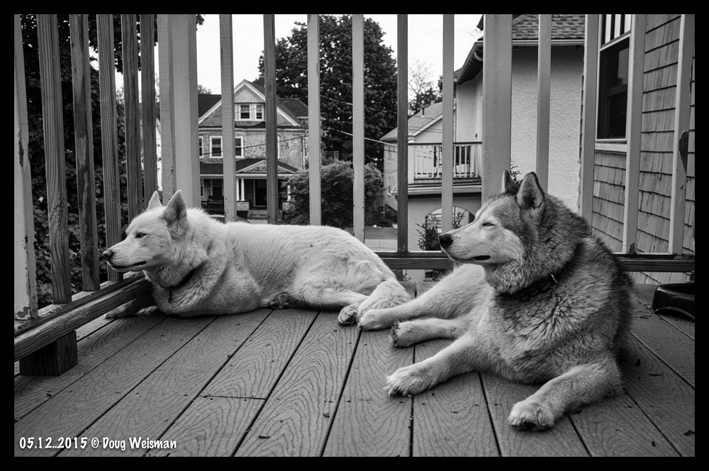 Neighborhood watch dogs.