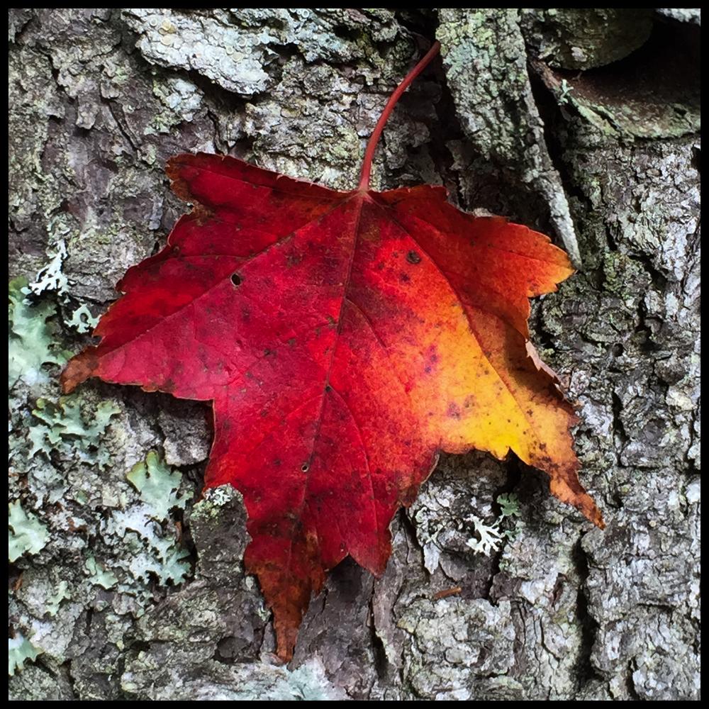 Leaf peeping.