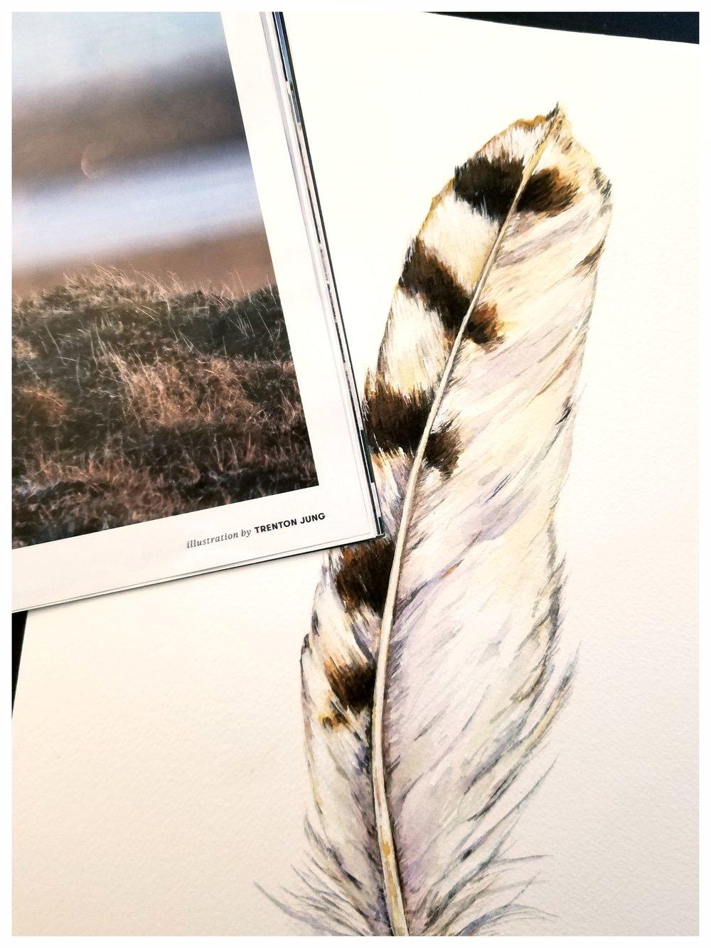 Snowy Owl Feather