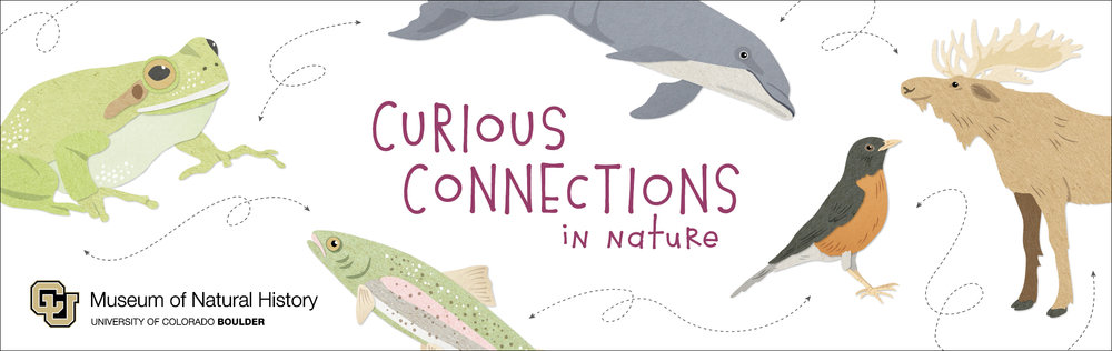 Promotional Banner  University of Colorado Natural History Museum (Including illustrations) Adobe Illustrator