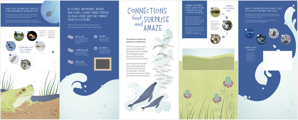 Exhibit Panels  University of Colorado Natural History Museum (Including illustrations) Adobe Illustrator