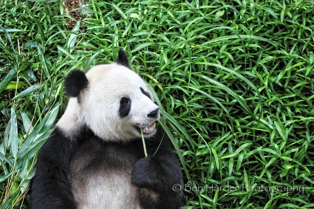 Website - Branded - Animals -19.jpg