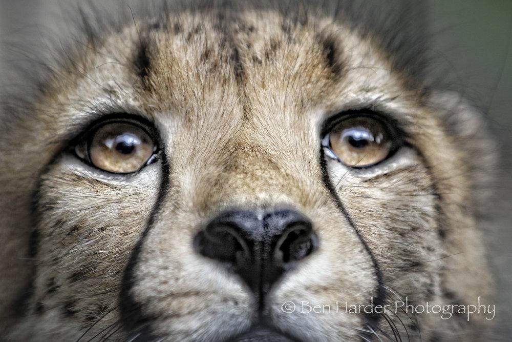 Website - Branded - Animals -18.jpg