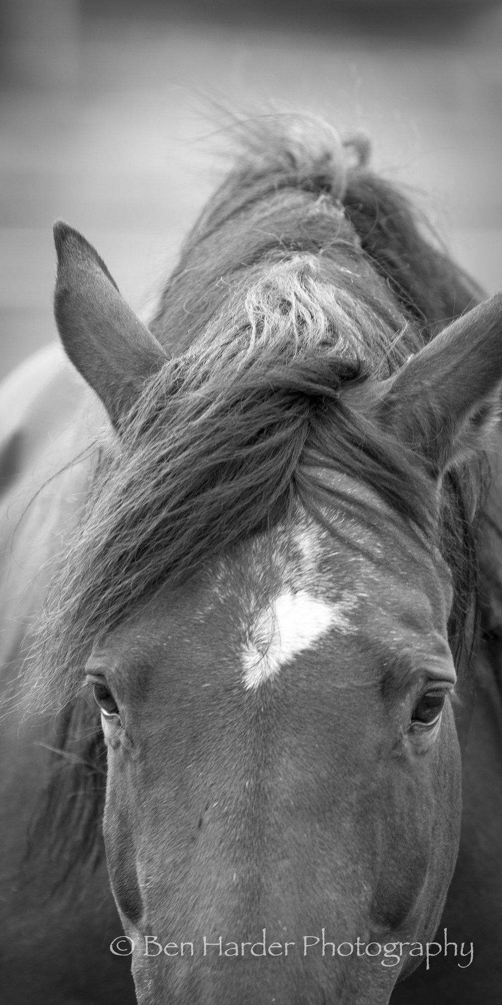 Website - Branded - Animals -14.jpg