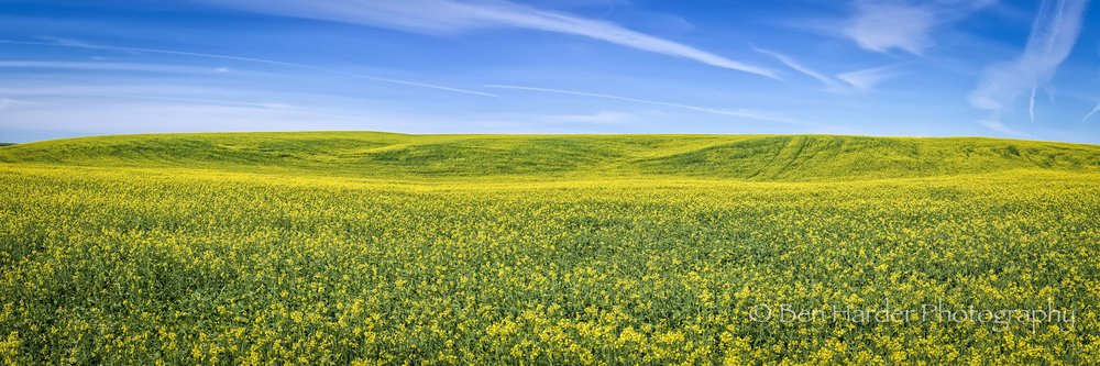"""Fields of Gold"" - Washtuchna, WA"