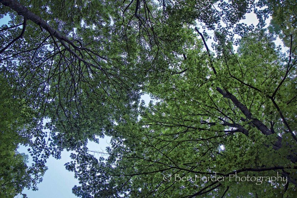 """Canopy"" - Fayatteville, WV"