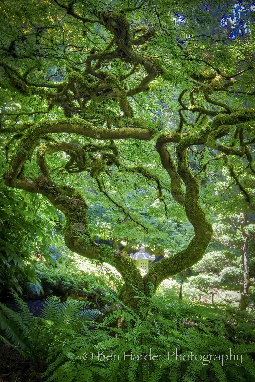 """Zen"" - Buchart Gardens, BC, Canada"