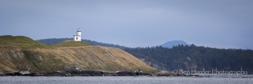 """Eagle Eye"" - San Juan Islands, WA"