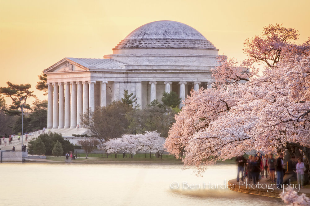 Jefferson Memorial (during Cherry Blossoms)