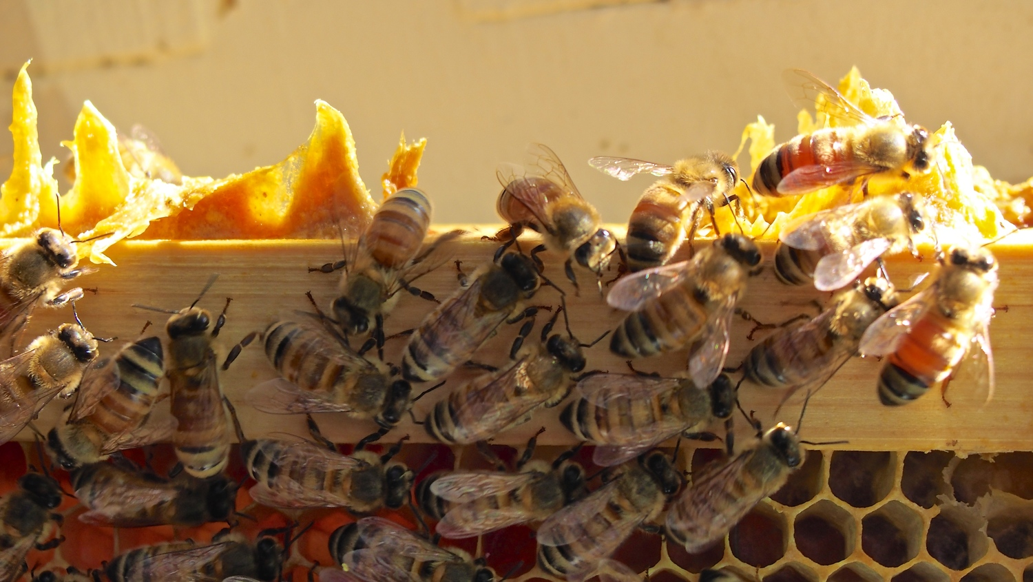 Nycbas Best Practices For Beekeeping New York City Beekeepers