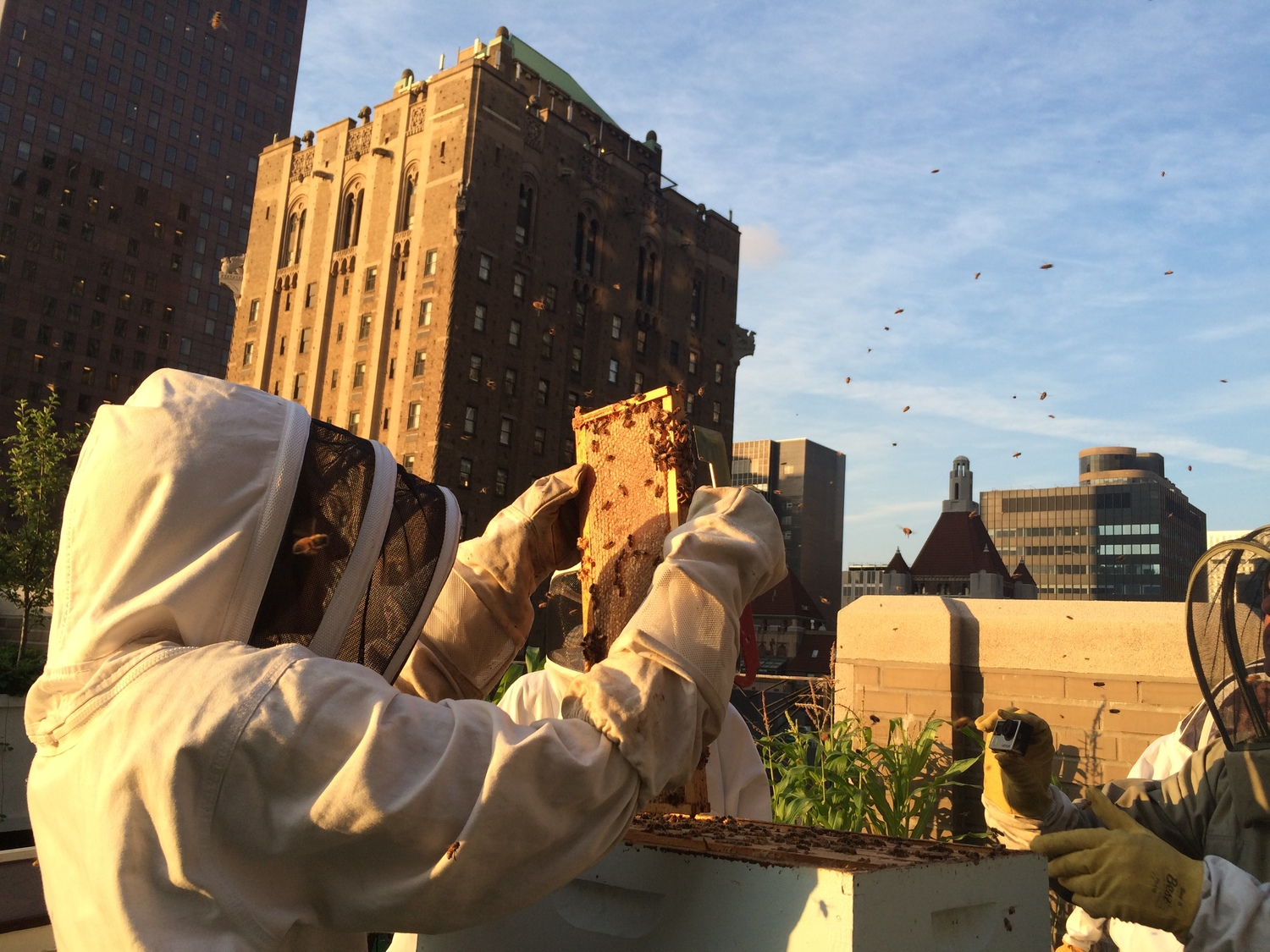 One of the most interesting things to do in the outdoors of NYC is beekeeping!