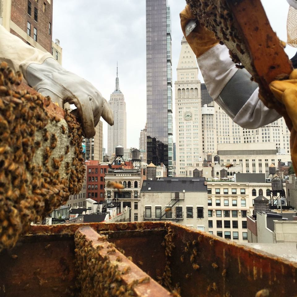 """Now as an apprentice urban beekeeper, when I zip up my full body sting suit  (while maybe singing in my head a little """"Who you gonna call? Ghostbusters!"""