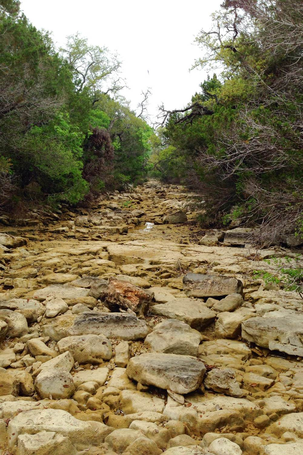 Slaughter Creek, southern Travis County, Texas