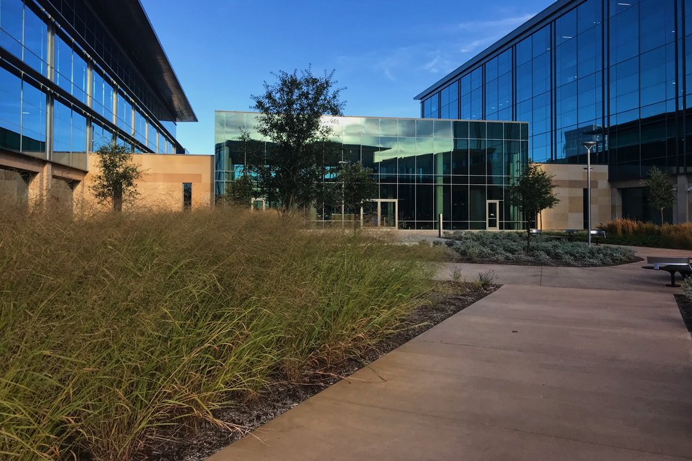 Rooftop garden, Panicum sp., Switchgrass
