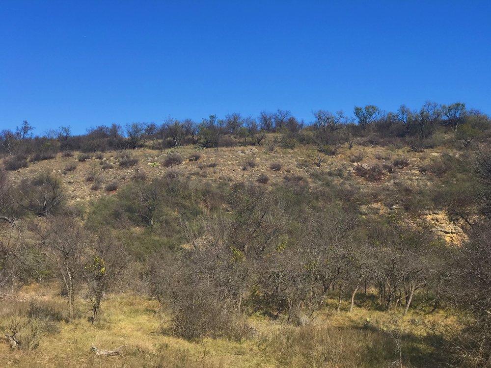 Limestone ridge with Ungnadia speciosa, Mexican buckeye