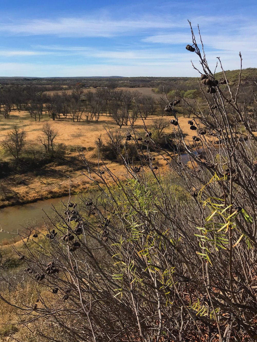 Ungnadia speciosa, Mexican buckeye with the Clear Fork of the Brazos River and Reynolds Bend in the background