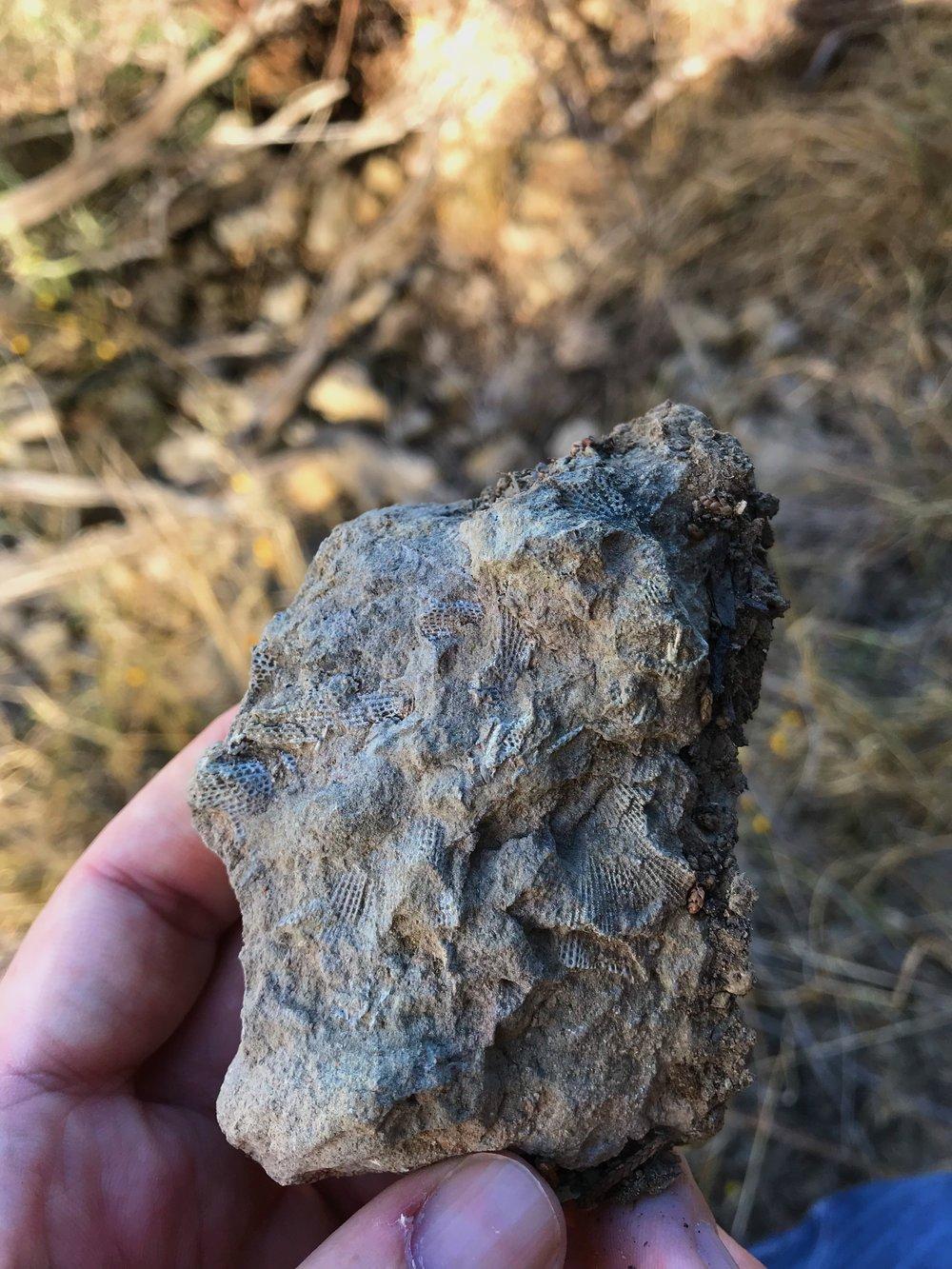 Fossils along the ridge