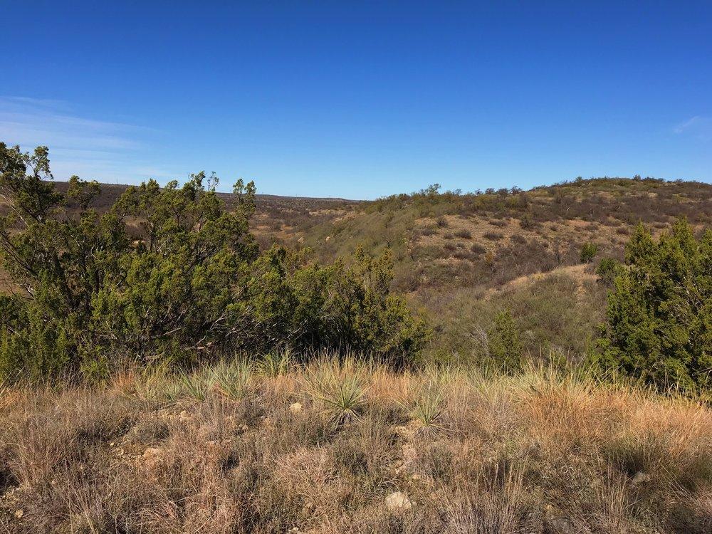 Yucca arkansana, Arkansas yucca