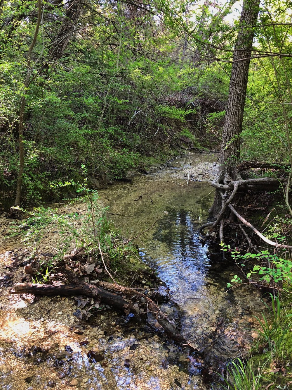 Many creeks snake their way between the hills.