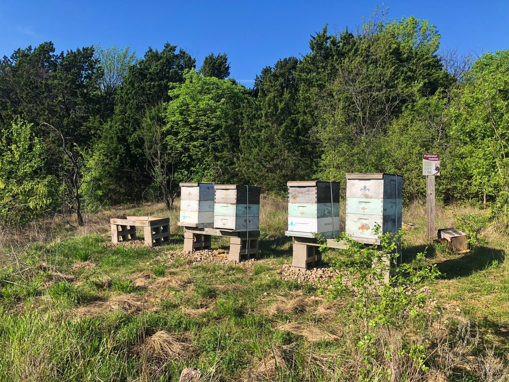 Bee boxes managed by Audubon Dallas.