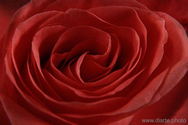 petal-maze.jpg