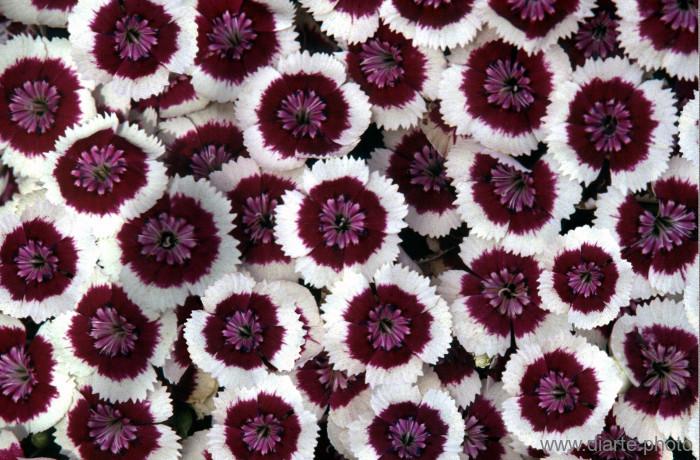 flower-bed.jpg