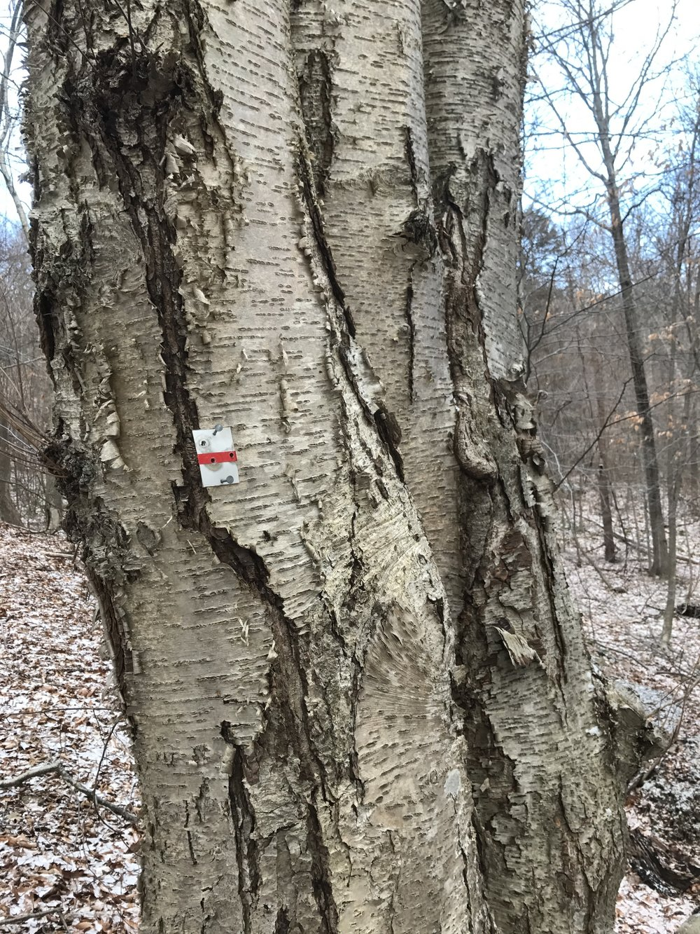 white trail marked in red [confused emoji]