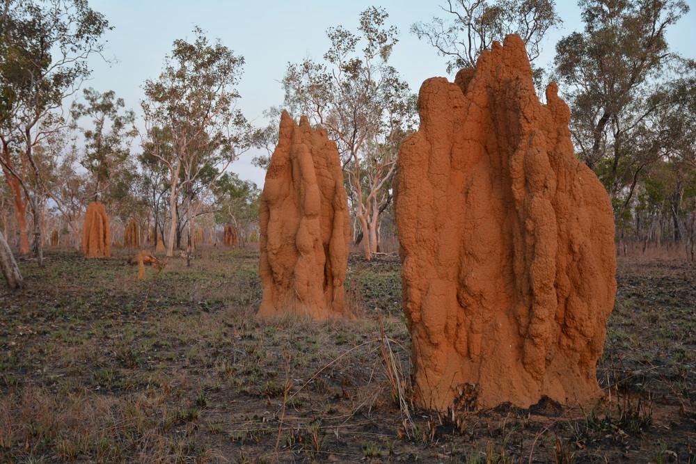 Termitières géantes dans les territoires du Nord