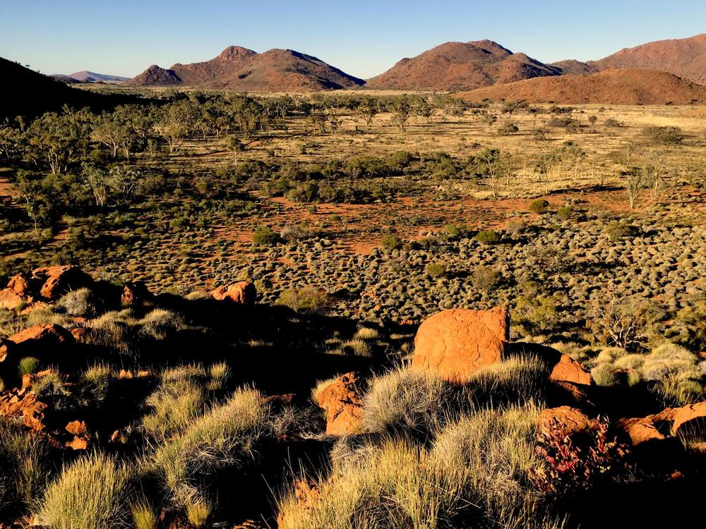 Les buissons de Spinifex dans le APY land. © Photo: Aboriginal Signature Estrangin Fine Art