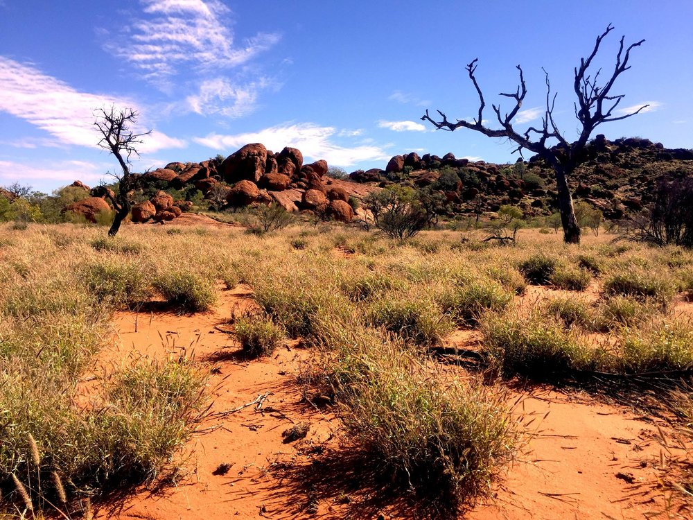Paysage avec des arbres carbonisés dans le APY land © Photo : Aboriginal Signature • Estrangin Fine art gallery