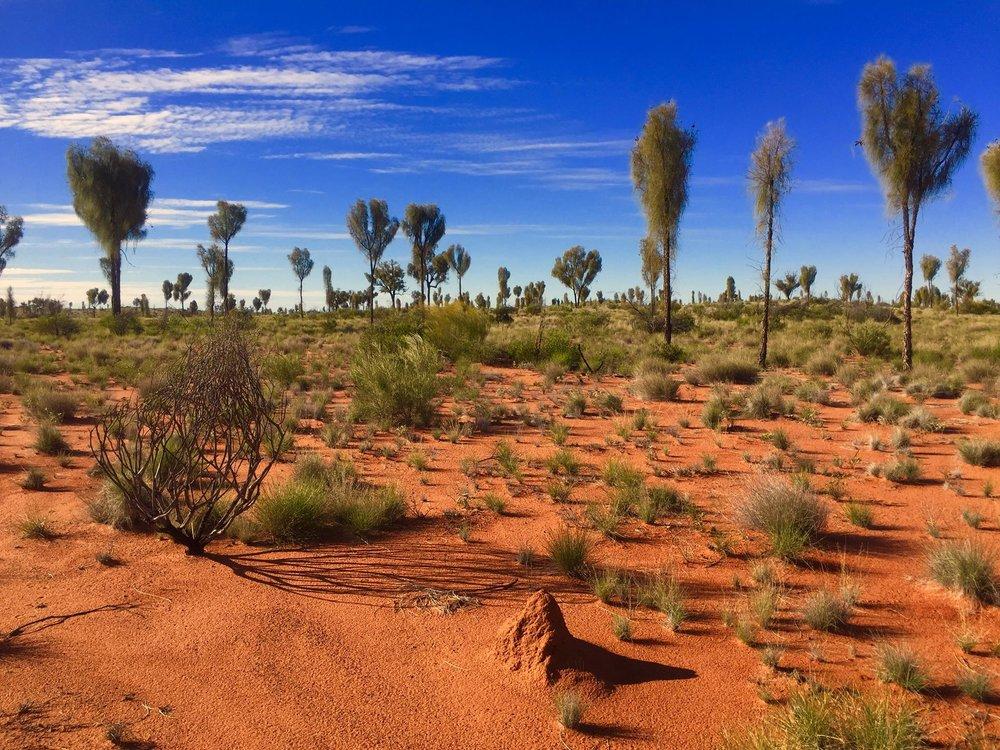 La nature sauvage dans ces immensités désertiques australiennes. © Photo : Aboriginal Signature • Estrangin Fine art gallery