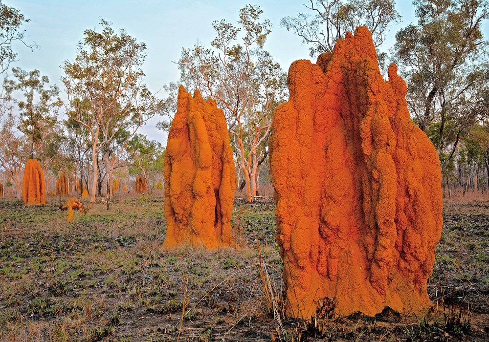 Termitières géantes dans le Kimberley Australien. Proche de Warmun. 2014 © Photo : Aboriginal Signature Estrangin gallery