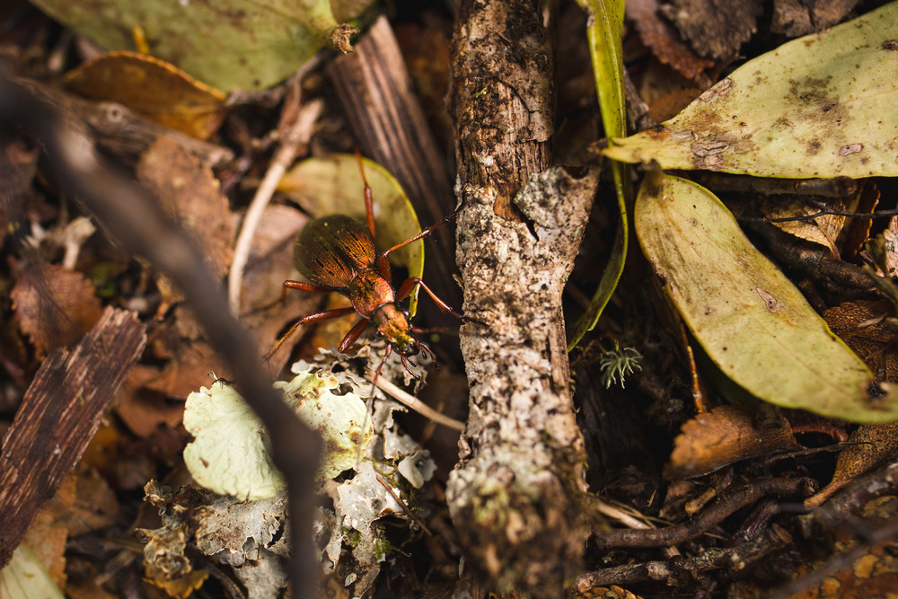 futualefu-chile-patagonia-bug