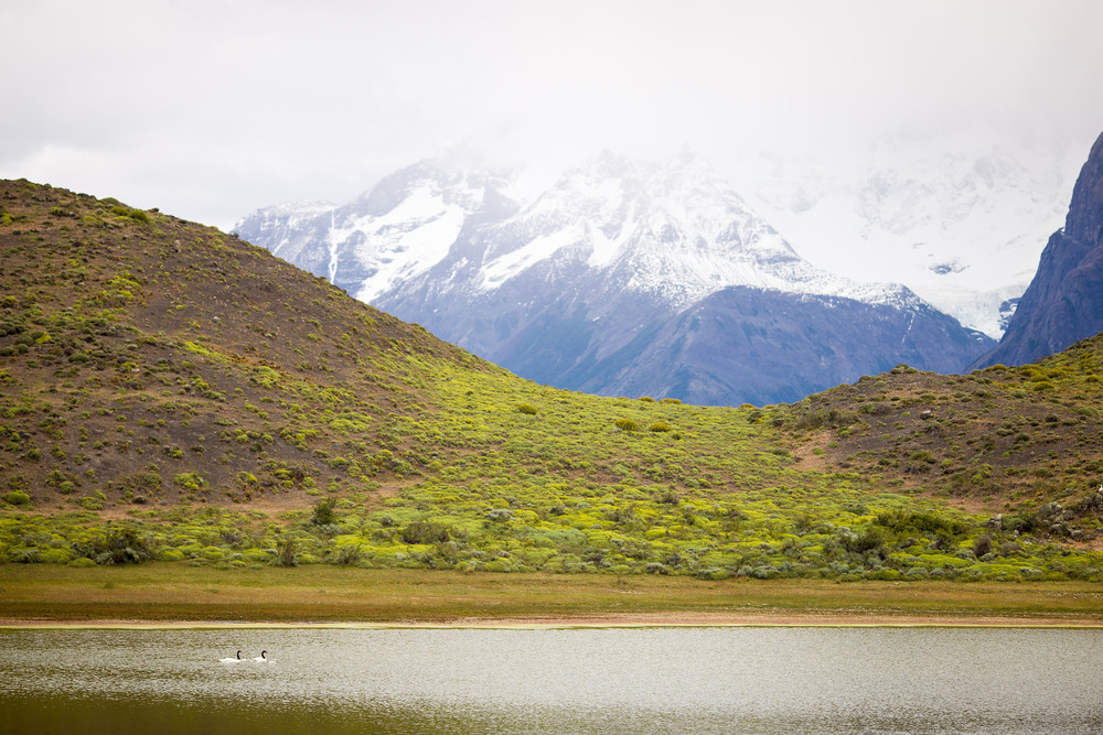 Wedding-Travellers-Overlanding-Destination-Wedding-Chile-Torres-del-Paine-black-necked-swan-laguna-lake-amarga