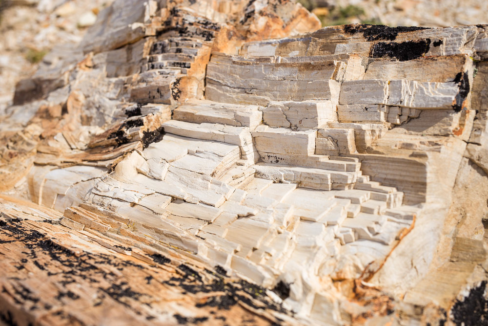wedding-travellers-argentina-petrified-forrest