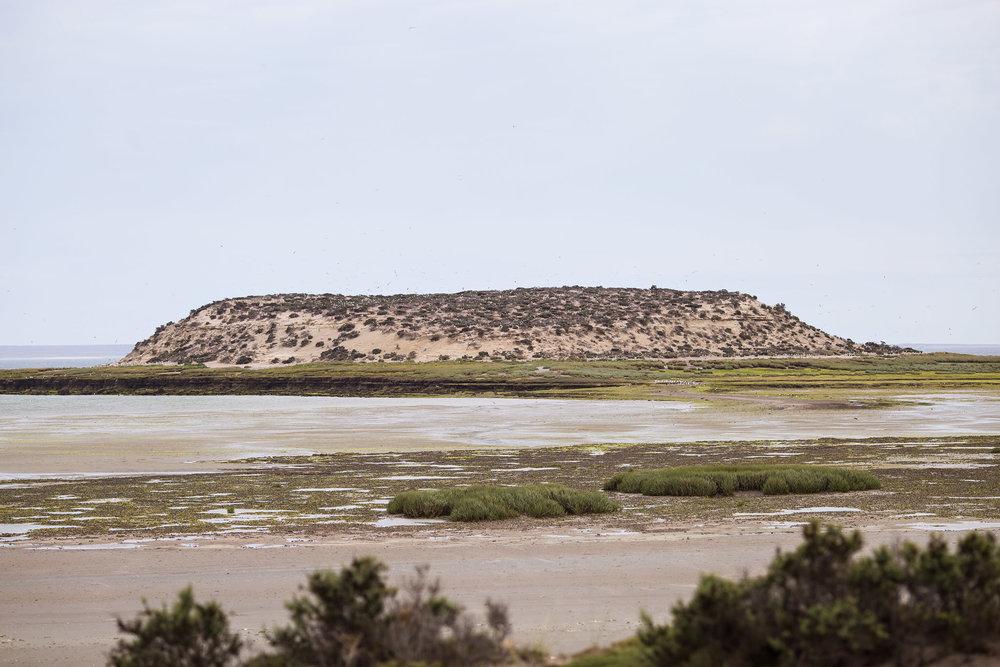 wedding-travellers-argentina-peninsula-valdes-isla-de-los-pajaros-antoin-de-saint.exupery-island-birds