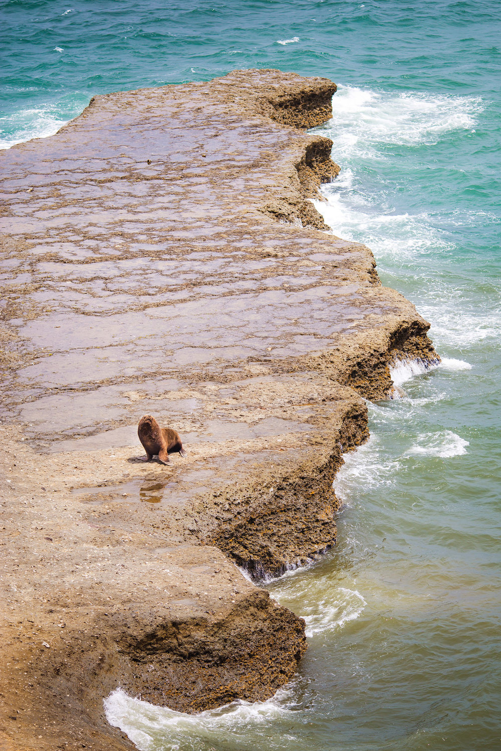 wedding-travellers-argentina-peninsula-valdes-sea-lion