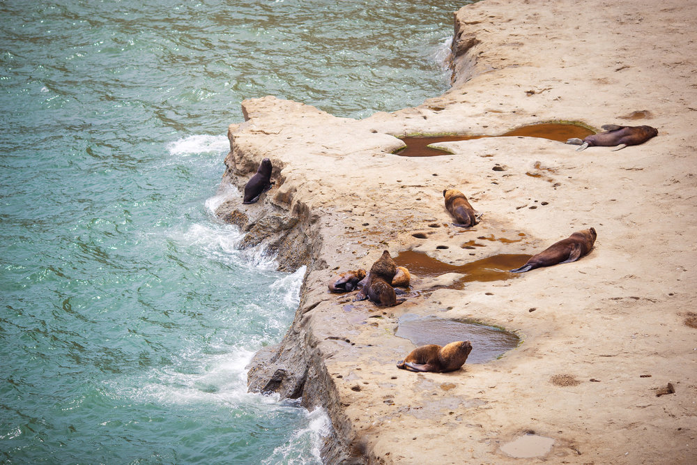 wedding-travellers-argentina-peninsula-valdes-sea-lion-shore-coast-cliff