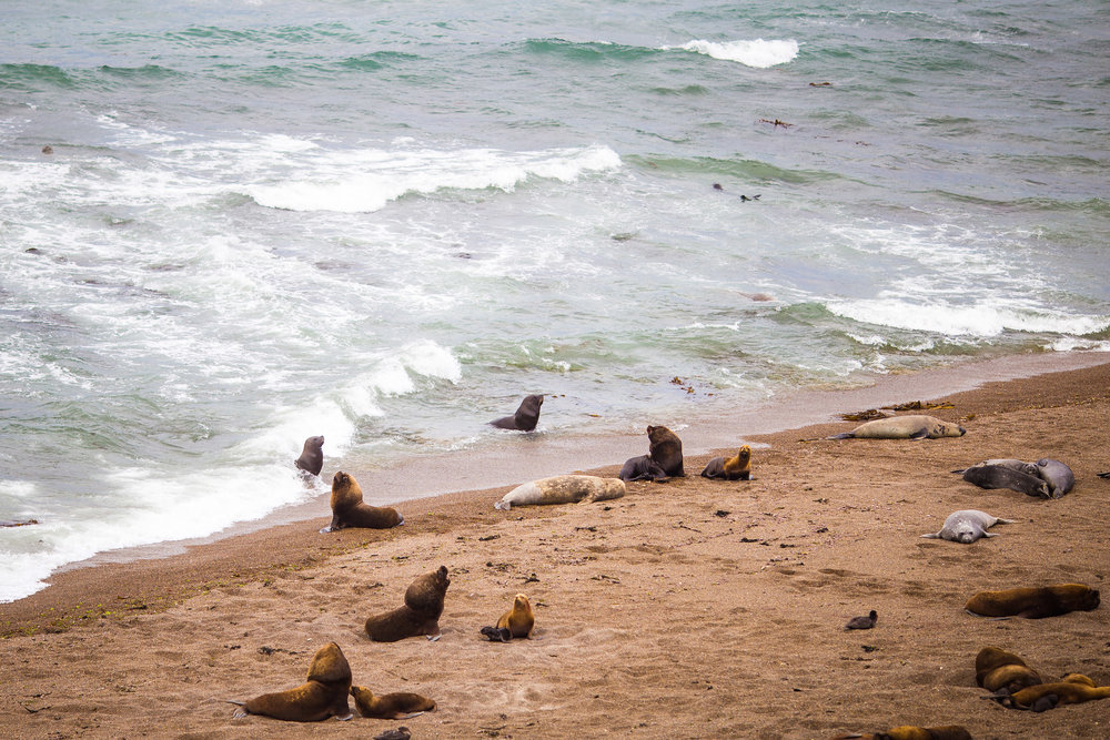 wedding-travellers-argentina-peninsula-valdes-sea-lion-beach