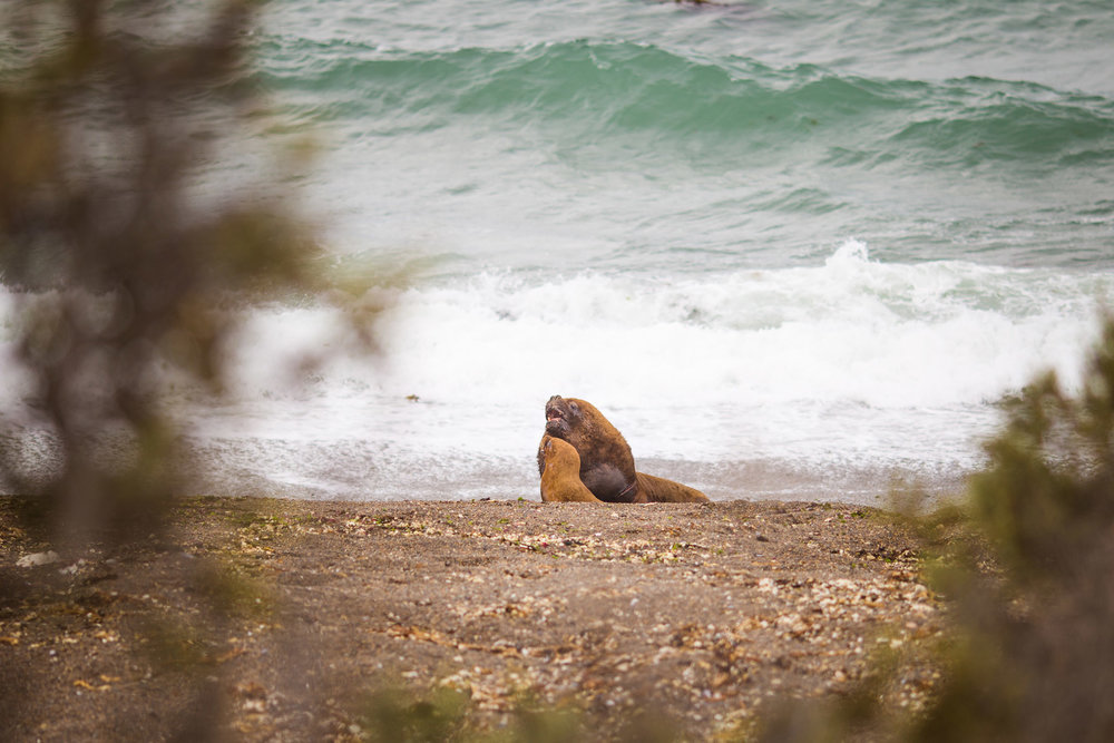 wedding-travellers-argentina-peninsula-valdes-sea-lion-couple