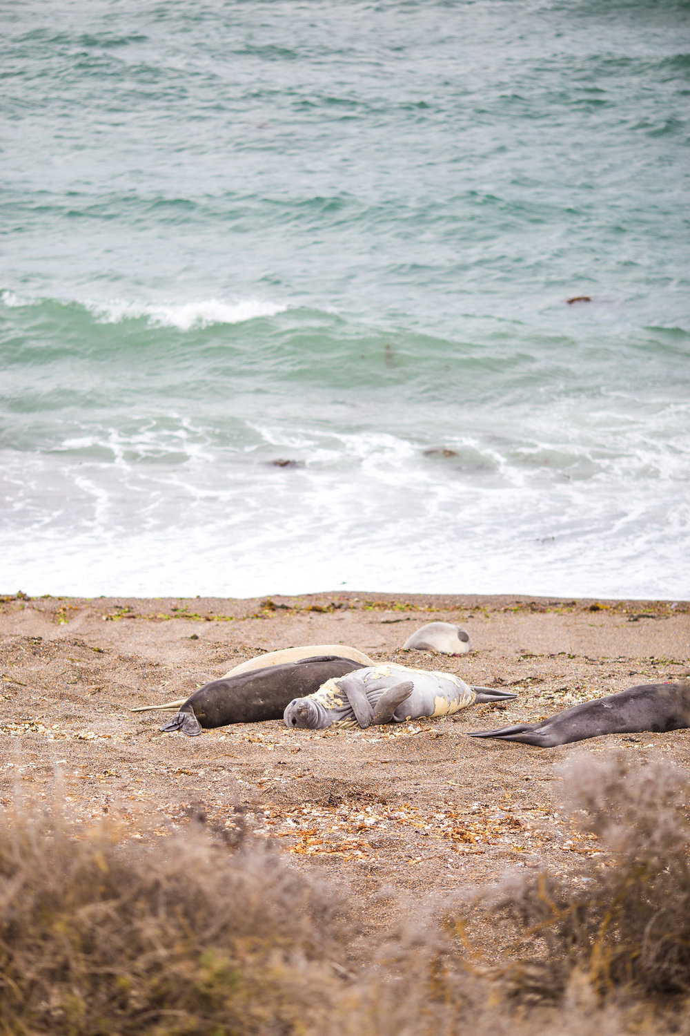 wedding-travellers-argentina-peninsula-valdes-elephant-seal-shore-coast-beach