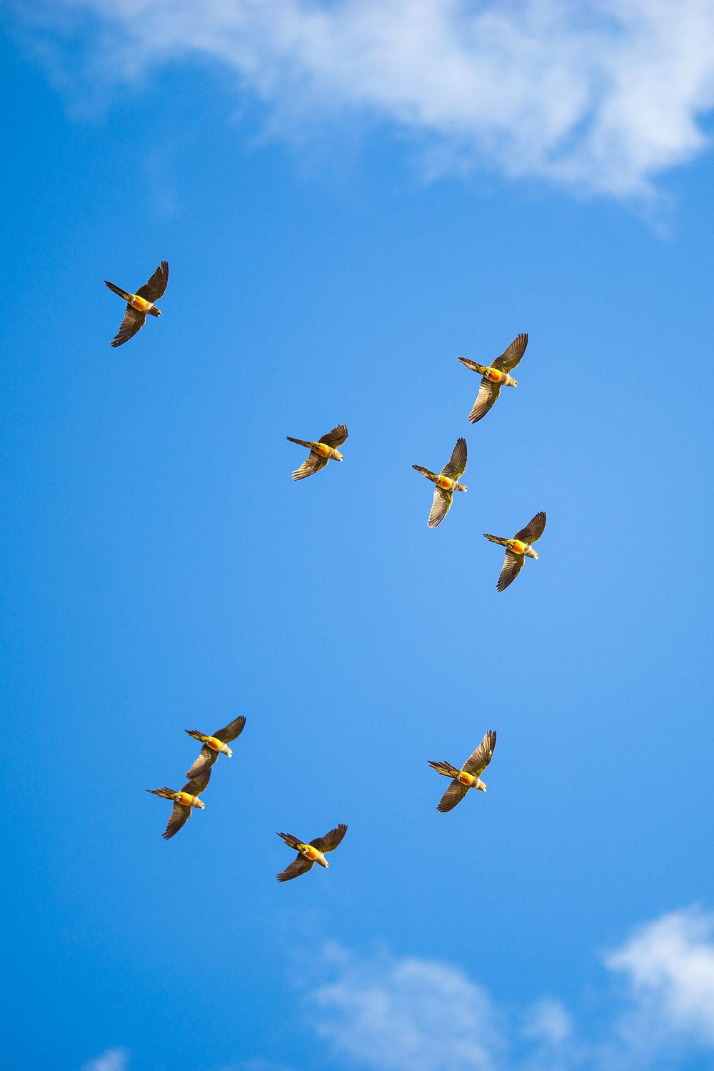 wedding-travellers-argentina-parrots-balneario-del-condor